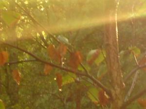 I skogen