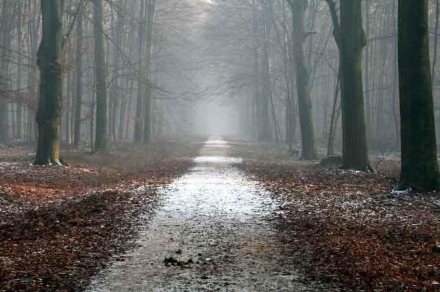 autumn calm creepy dried leaves