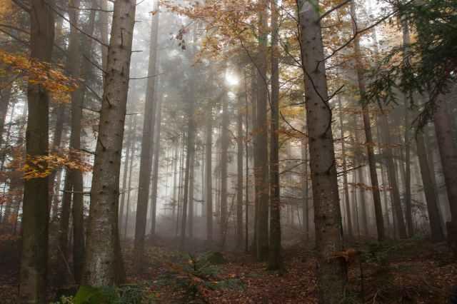 atmosphere autumn beautiful branch